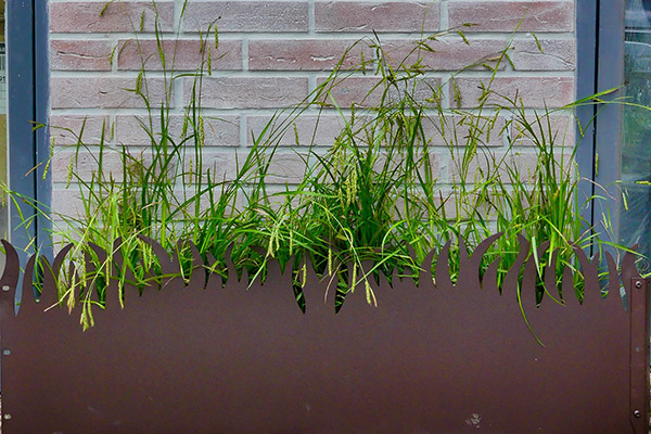 Bordure GrassBorder pour frise de verdure de facade